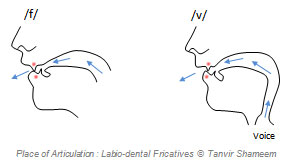 Labio-dental Fricatives
