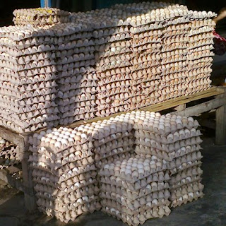agen telur ayam arab surabaya