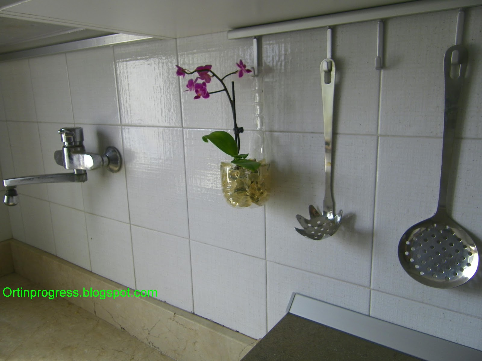 Orti in progress perch tenere l 39 orchidea in cucina - Sassi decorativi ikea ...