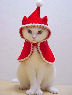 Nature wallpaper: Funny Animals Christmas Pictures and Funny Animals ...