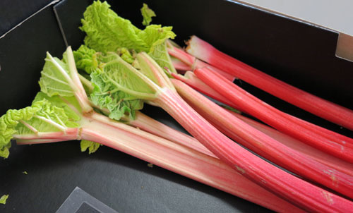 Rhubarb is good for you
