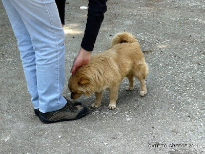 Nemean Dog