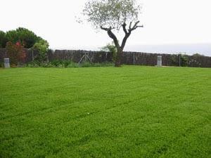 empezar con un jardin y instalar tu grama como