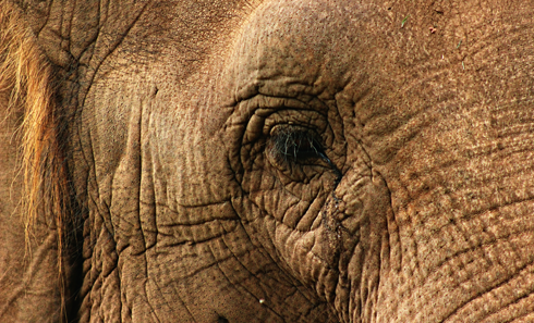 elephant honolulu zoo hawaii