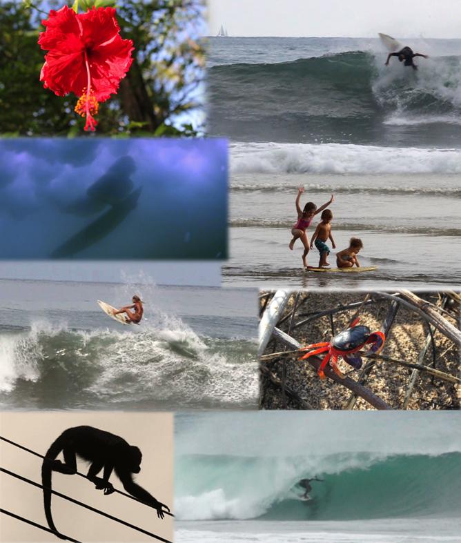 danielle ciminero surfing costa rica