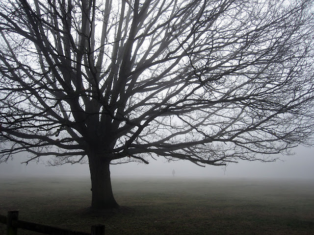 Oak tree in mist on Hayes Common, 15 March 2012.