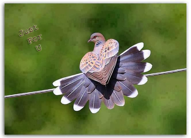 lovely dove image