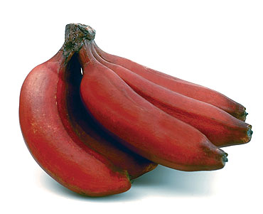 Small Farm Sustainable Living: Red Banana (Jamacian Banana)