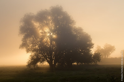 Рассвет на туманном лугу