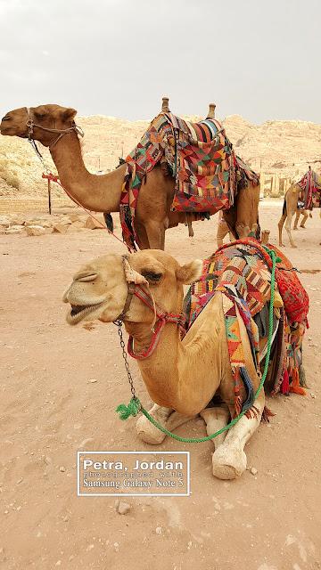 Taxi in Petra Camel