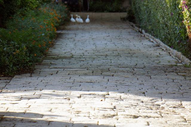 san anton gardens geese malta