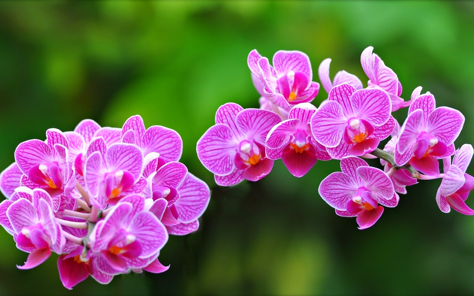 Orchid-flower-pictures-for-wishes-social-sharing.jpg