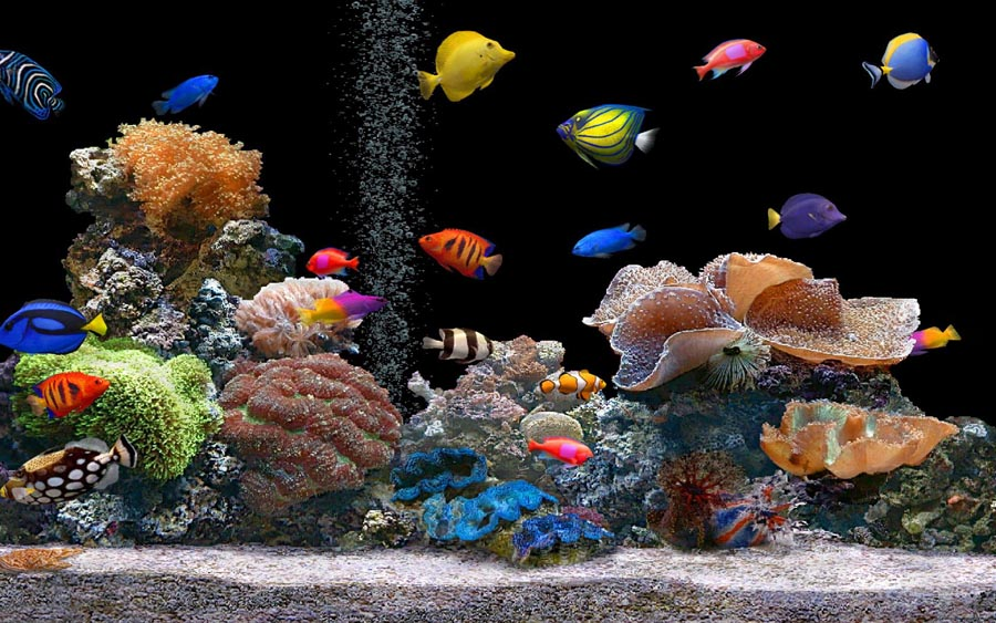 Image Result For Aquarium Cost