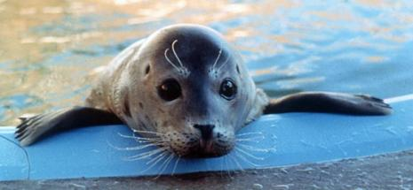Mo-m - Save the Mediterranean Monk Seal