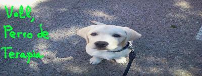 Voll un perro de terapia