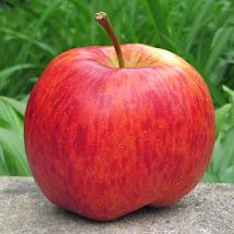 Adam' Apples Smitten