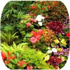 bitkisel siğil tedavisi