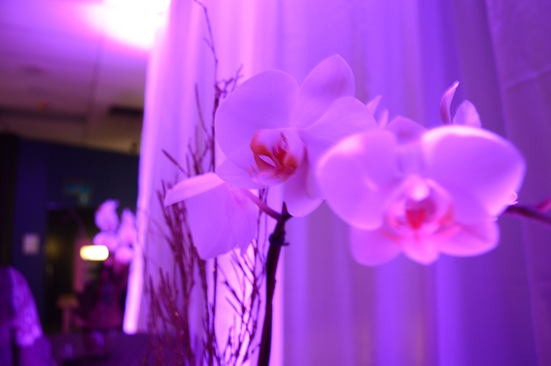 orchids in purple lighting