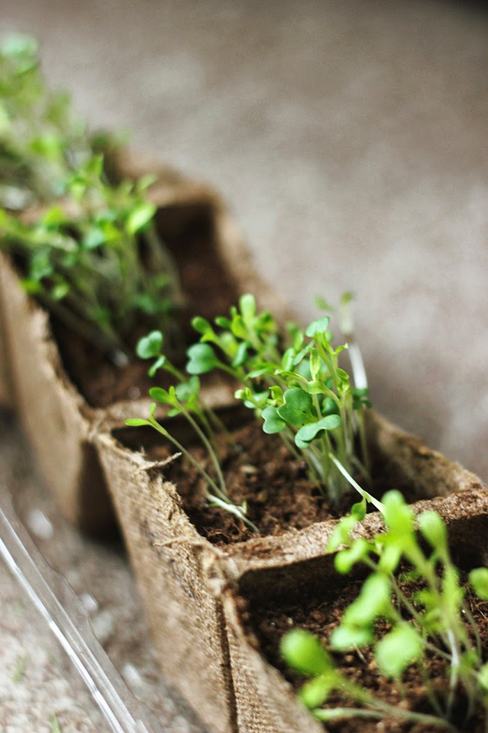 10 Spring Plant + Planter DIY Projects