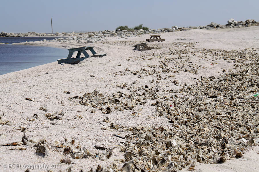 Dead fish and trash salton sea 3 lefty photo blog for Salton sea fishing