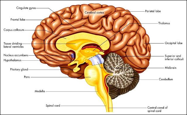 spina bifida research paper outline