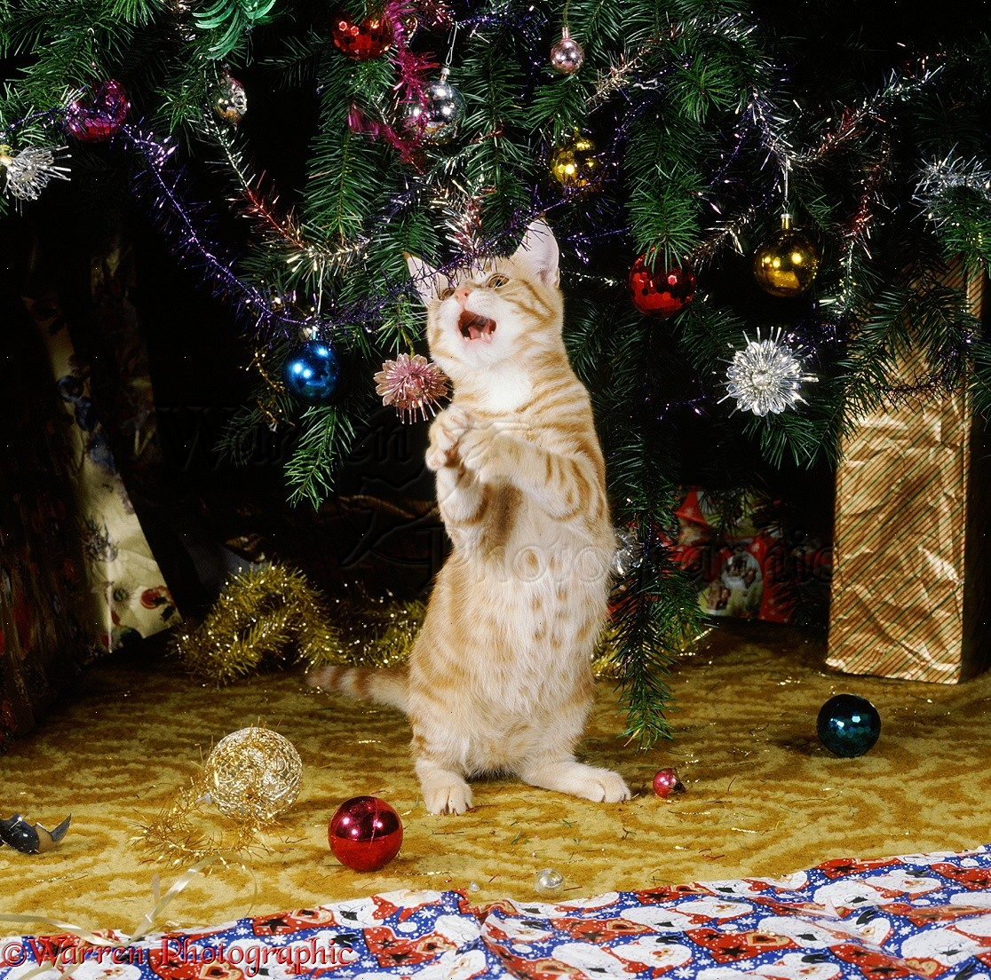 Laguna Hills Animal Hospital: Keepin\' Kitties Out Of The Christmas Tree!