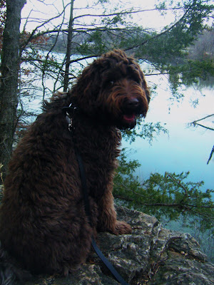 Alfie's sitting on a rocky outcropping overlooking a pond framed by tree branches; he's looking back over his shoulder at the camera