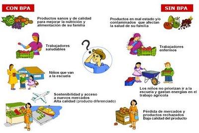 Tecnica manipulacion de alimentos ufp vanesa villamil 11 for Buenas practicas de manipulacion de alimentos