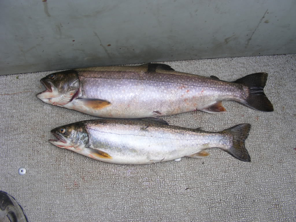 What the karp binders full of salmon for How to fish for lake trout
