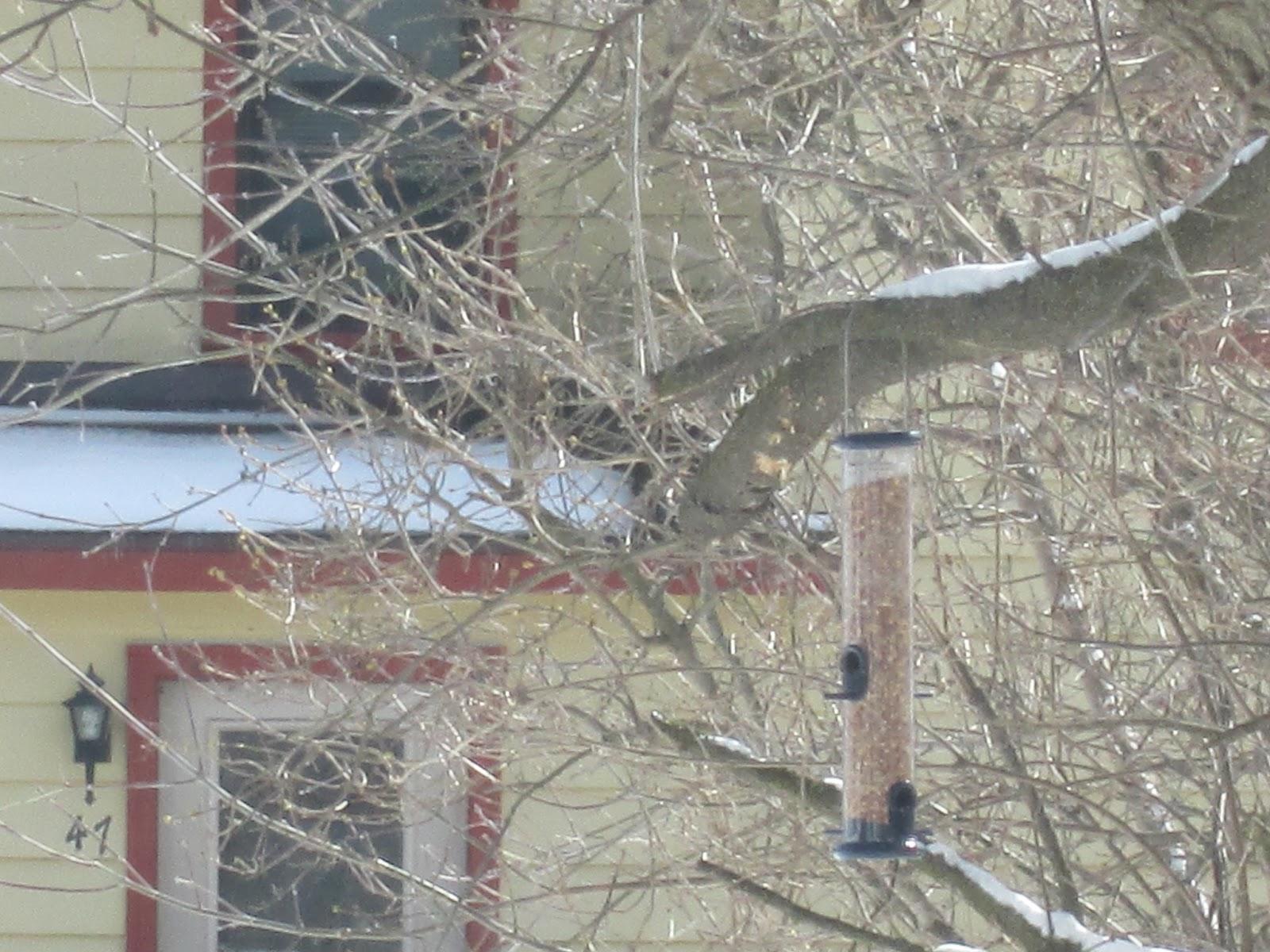 Acorn place a bird less feeder for Acorn feeder