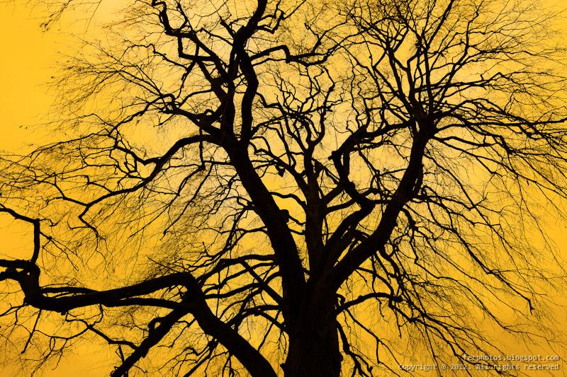 tree branches blood veins arteries orange sunset