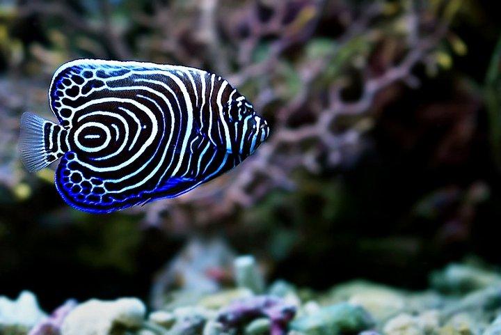 Exotic marine fishes unique pictures for Rare saltwater fish