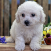 Cute Puppies pictures