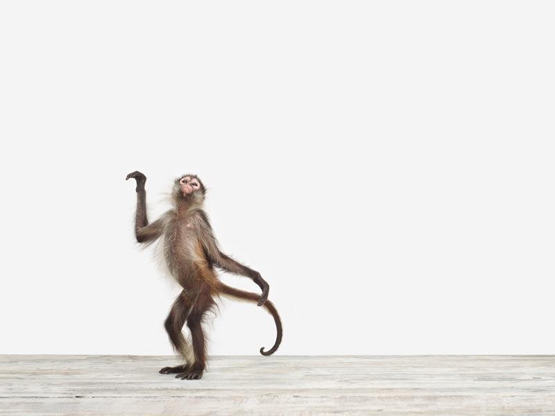baby monkey animal portrait by sharon montrose