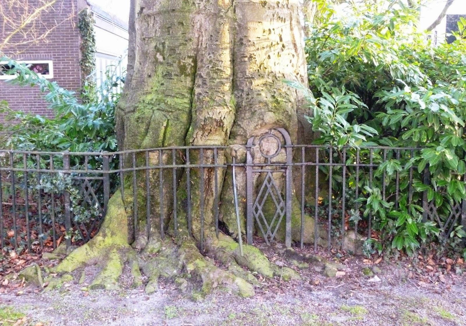 Bomenstichting achterhoek: februari 2015