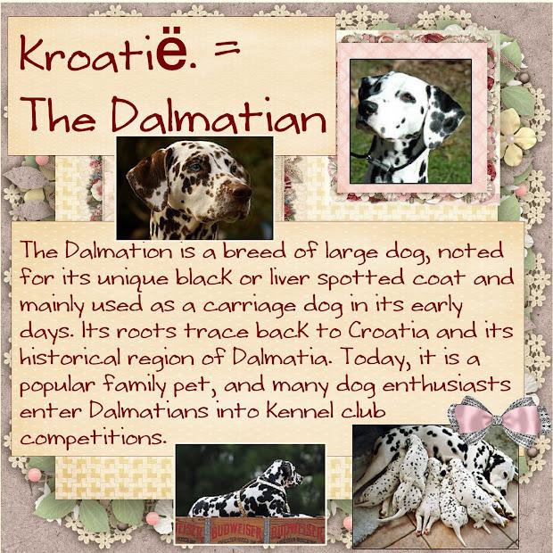 Nov.2016 - K = Kroatië = Dalmatian