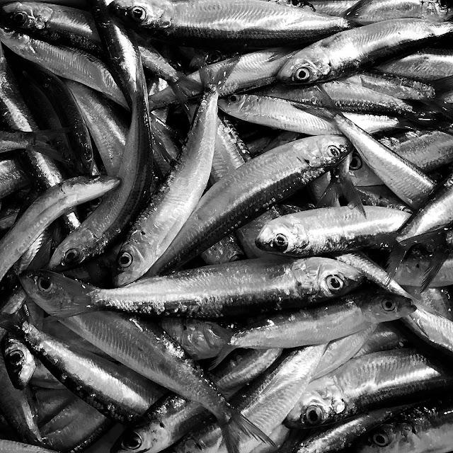 acciughe, fish, Liana solis