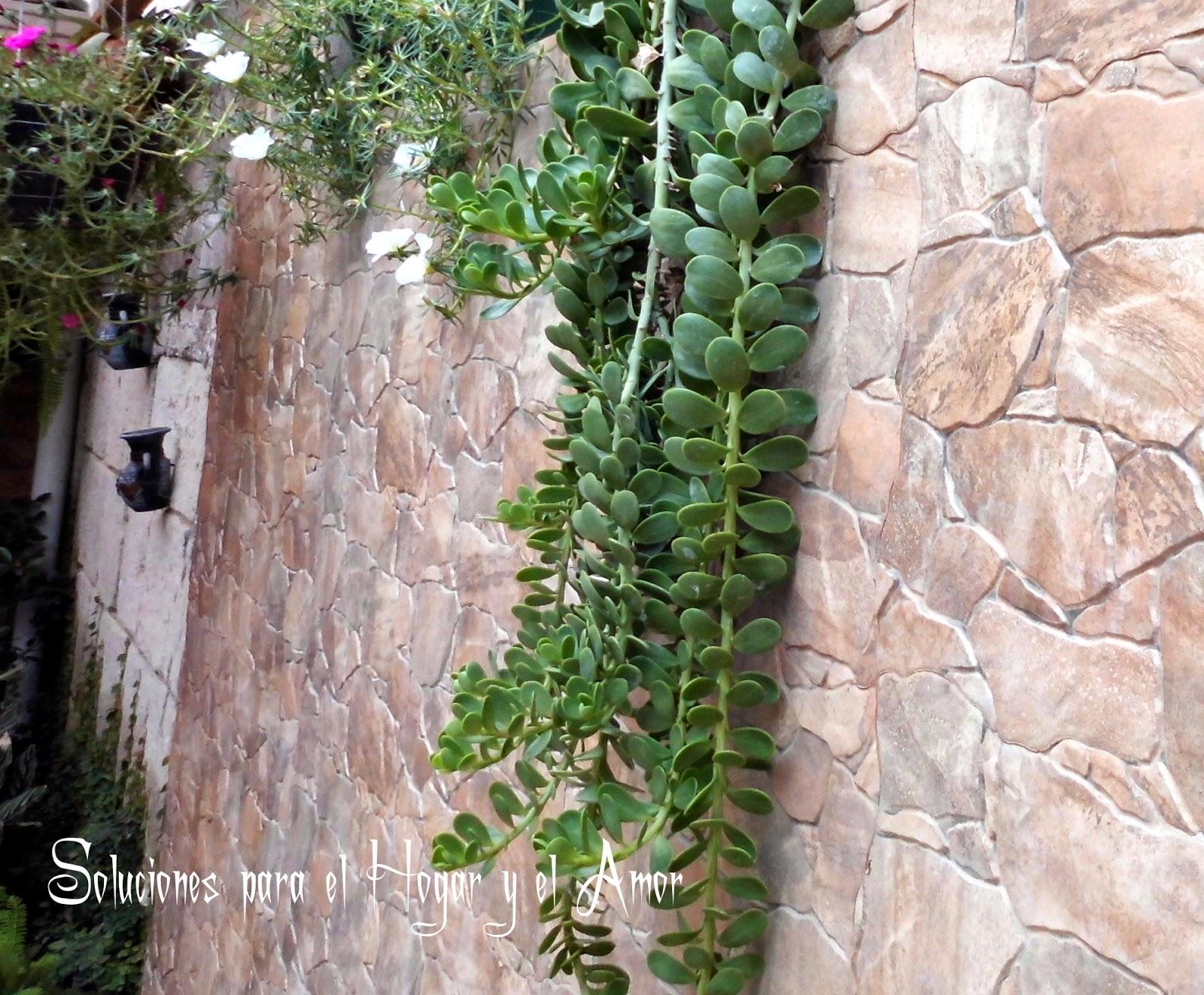 Plantas y Flores, planta colgante,pared de piedra, texturas