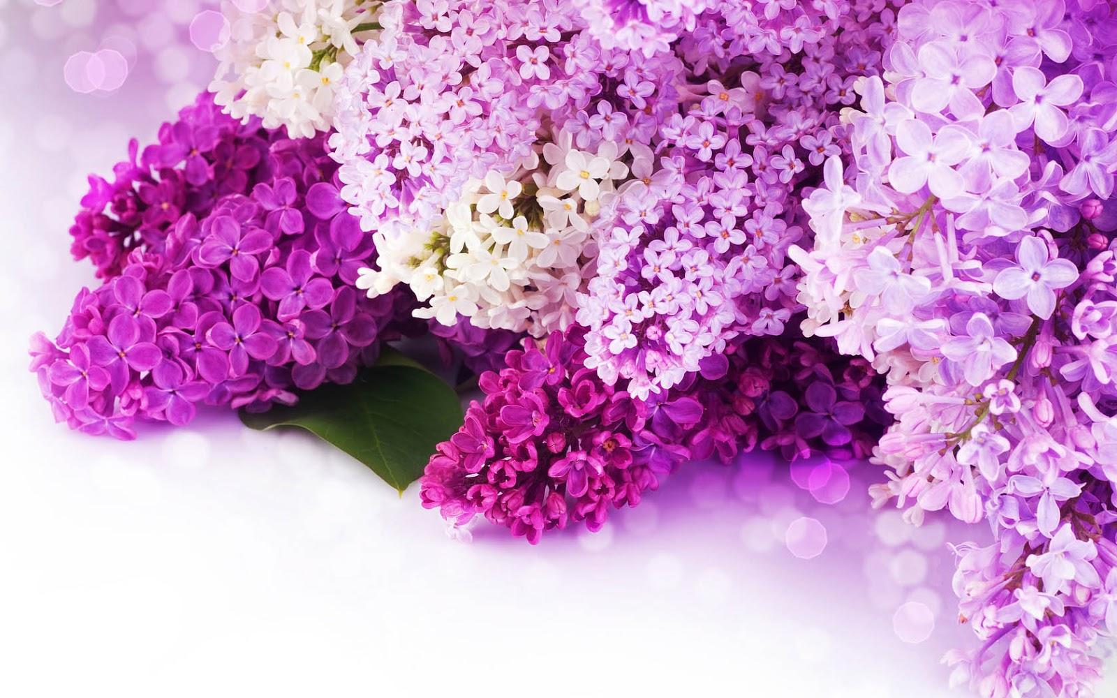 download wallpaper 1024x600 lilac - photo #30