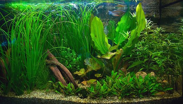 Produits anti algues engrais pour aquarium conditionneur for Plante pour aquarium