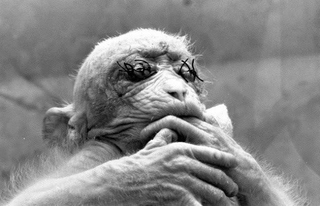 horribles experimentos científicos con animales