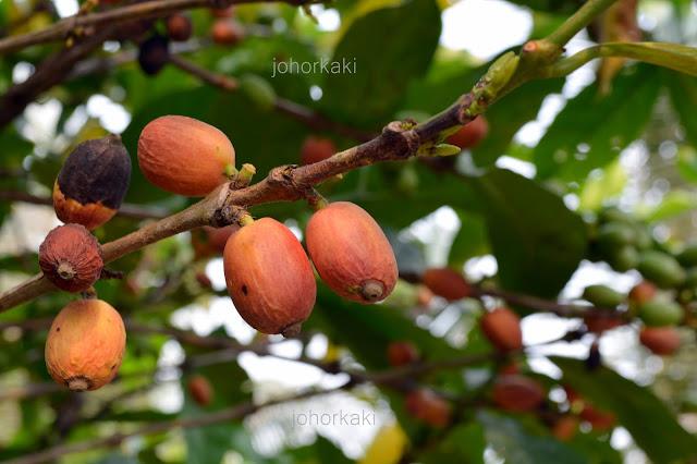 Sai-Kee-Coffee-434-Muar-Johor