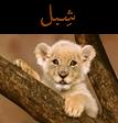 شبل أسد