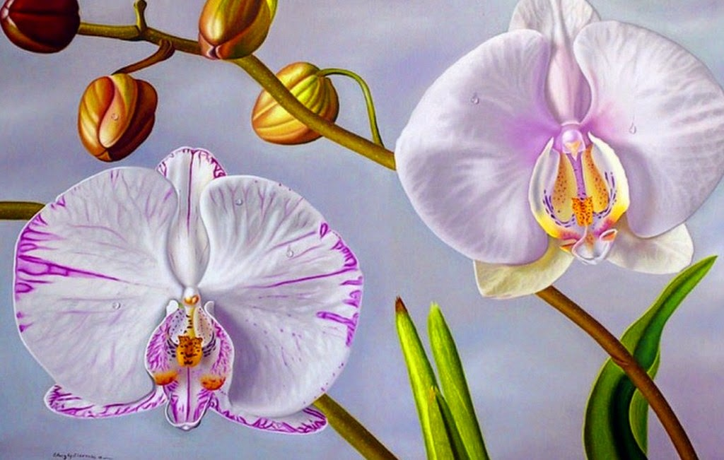 bodegones-con-orquideas