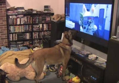 televisión-mascotas