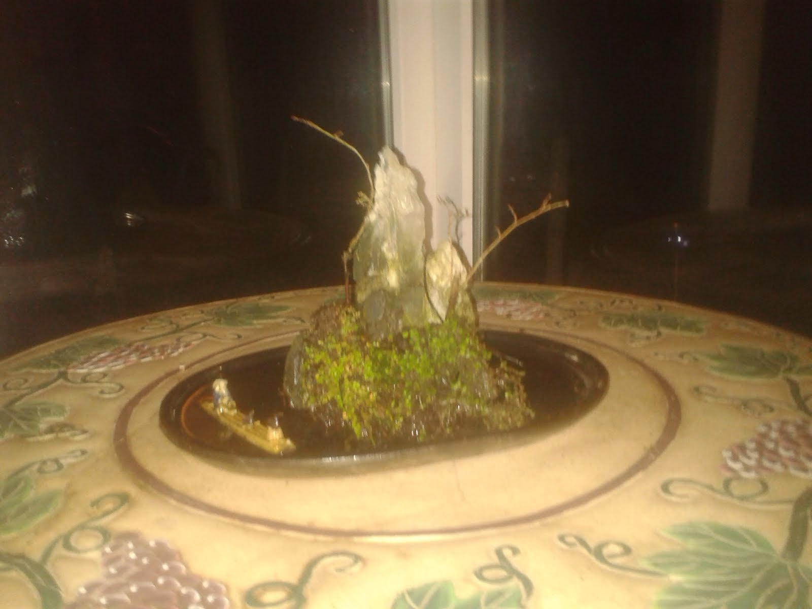 New Bonsai