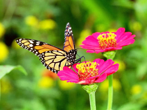 Http True Wildlife Blogspot Com 2011 02 Butterfly Html