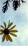 Flickr Tuga