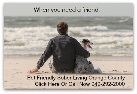 pet friendly rehab san juan capistrano wits inn recovery services