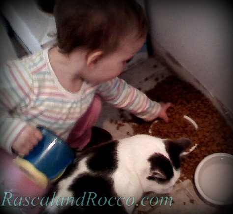 Little Things to be Thankful for #cats #catfood #baby #feeding #pets